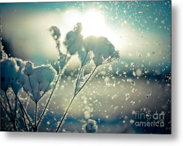 Metal Print featuring the photograph Snow Covered Branch Against Defocused Background.  by Raimond Klavins