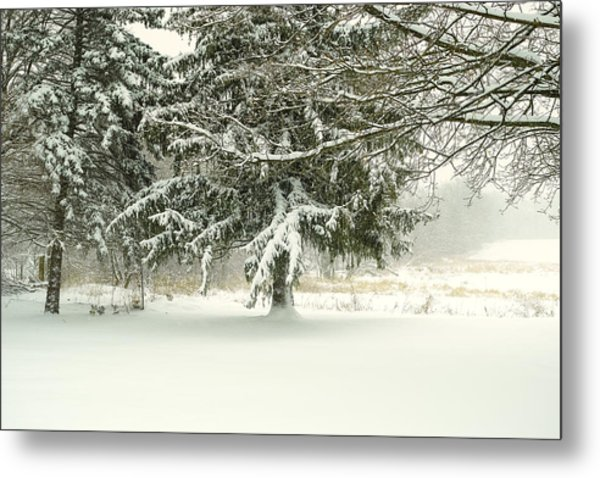 Snow-covered Trees Metal Print