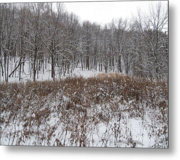 Snow Covered Woodland Metal Print