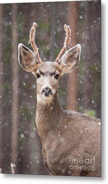 Snow Deer 1 Metal Print