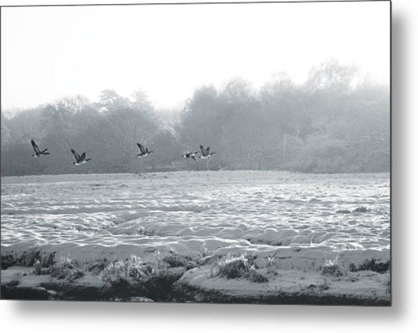 Snow And Geese Metal Print