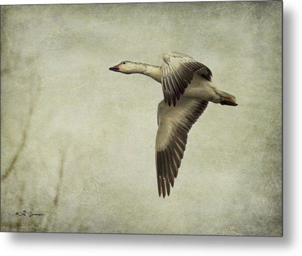 Snow Goose In Flight Metal Print