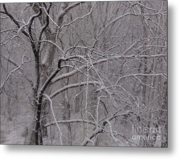 Snow In The Trees At Bulls Island Metal Print