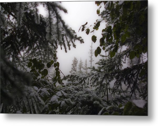 Snow In Trees At Narada Falls Metal Print