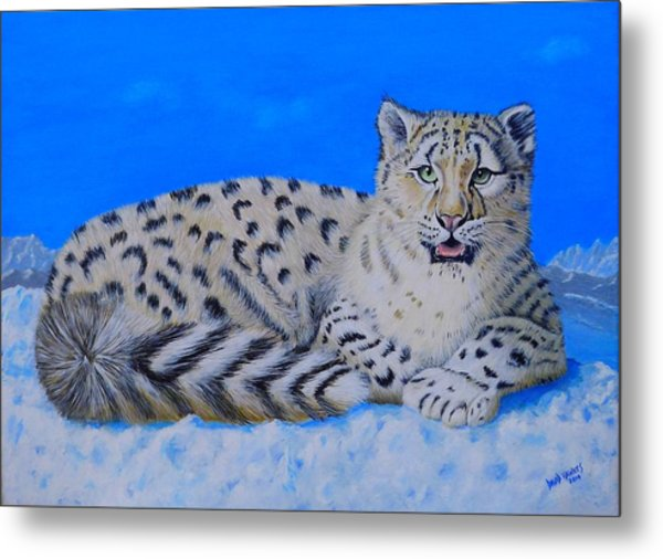 Snow Leopard Metal Print by David Hawkes