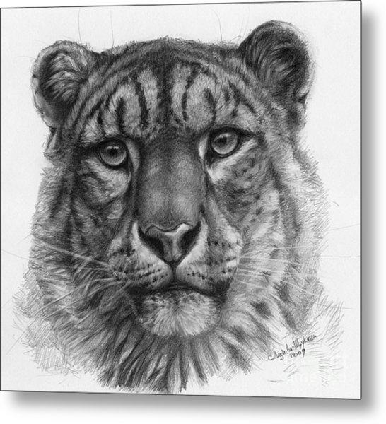 Snow Leopard - Panthera Uncia Portrait Metal Print by Svetlana Ledneva-Schukina