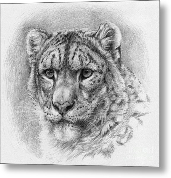 Snow Leopard - Panthera Uncia Metal Print by Svetlana Ledneva-Schukina
