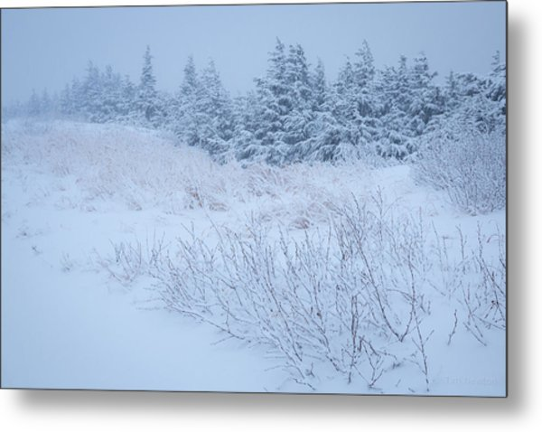 Metal Print featuring the photograph Snow On New Years Eve by Tim Newton