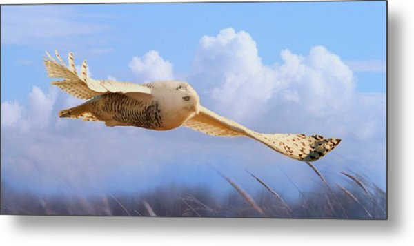 Snow Owl In Flight Metal Print