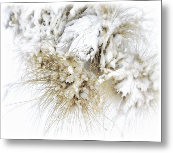 Snow Whiskers Metal Print