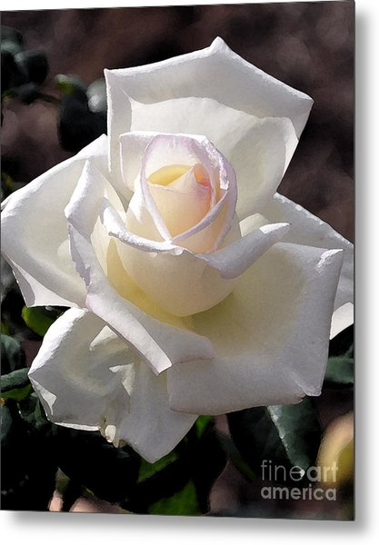 Snow White Rose Metal Print