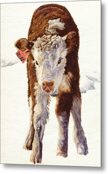 Country Life Winter Baby Calf Metal Print