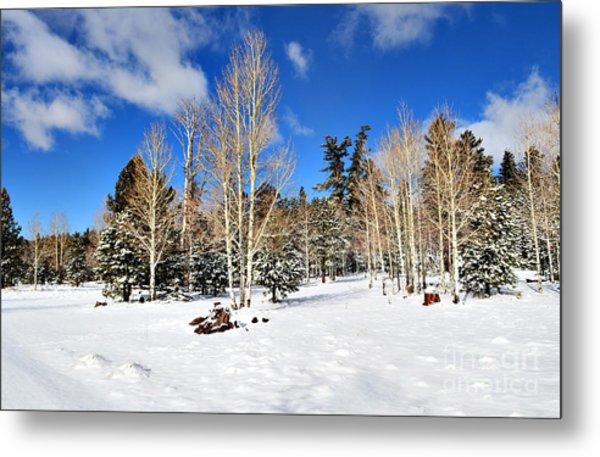 Snowy Aspen Grove Metal Print