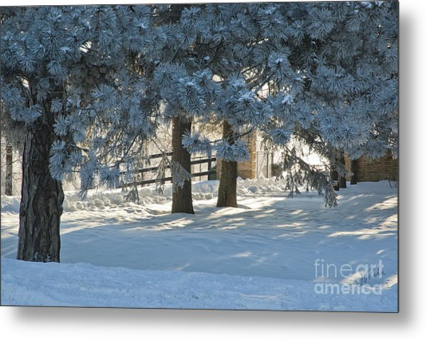 Snowy Blue Pines Metal Print