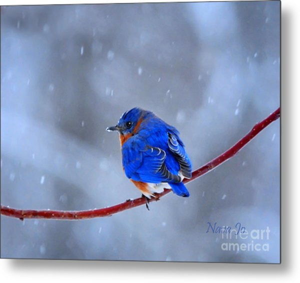 Snowy Bluebird Metal Print