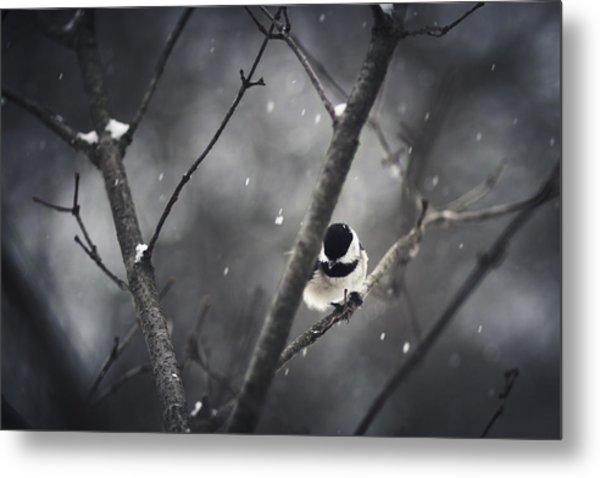 Snowy Chickadee Metal Print