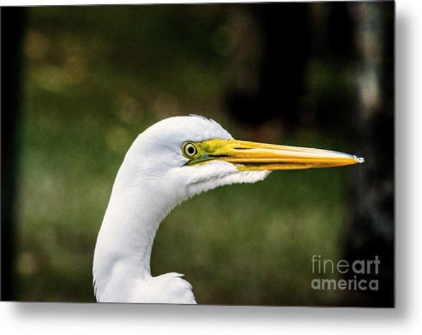 Snowy Egret Profile Metal Print