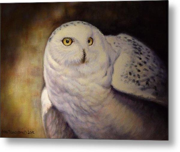 Snowy Owl Metal Print by Anna Franceova