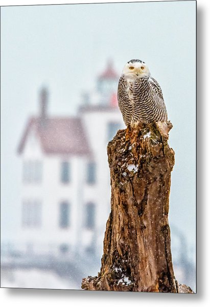 Snowy Owl At The Lighthouse Metal Print