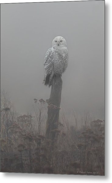 Snowy Owl  In The Mist Metal Print