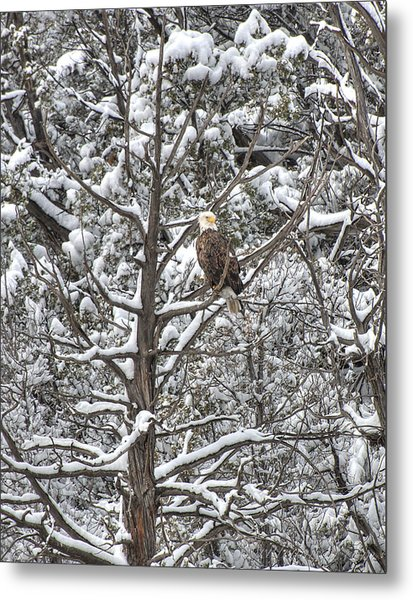 Metal Print featuring the photograph Snowy Perch Bald Eagle by Britt Runyon