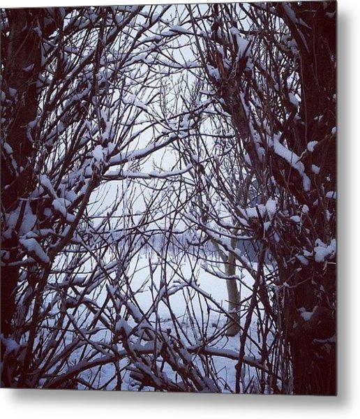 Snowy Poplars Metal Print