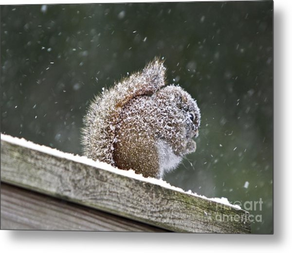 Snowy Squirrel Metal Print by Karin Pinkham