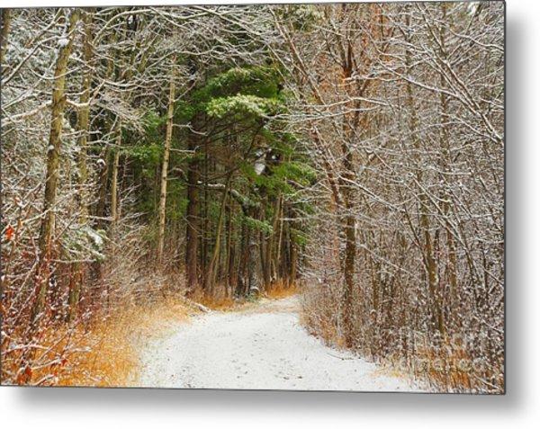 Snowy Tunnel Of Trees Metal Print