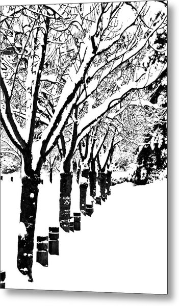 Snowy Walk Metal Print