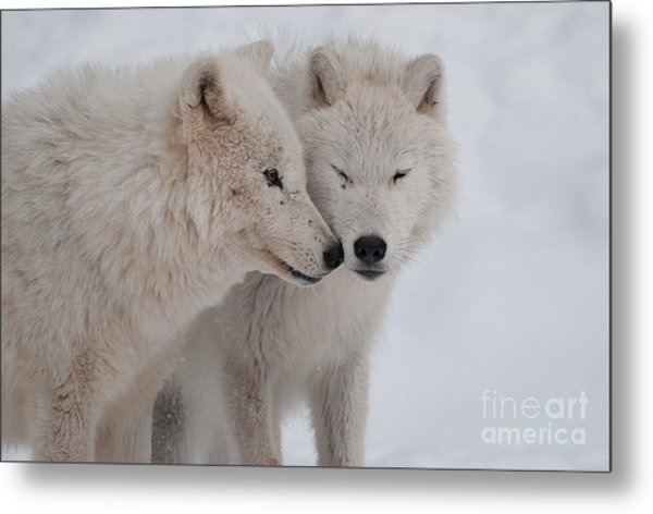 Snuggle Buddies Metal Print
