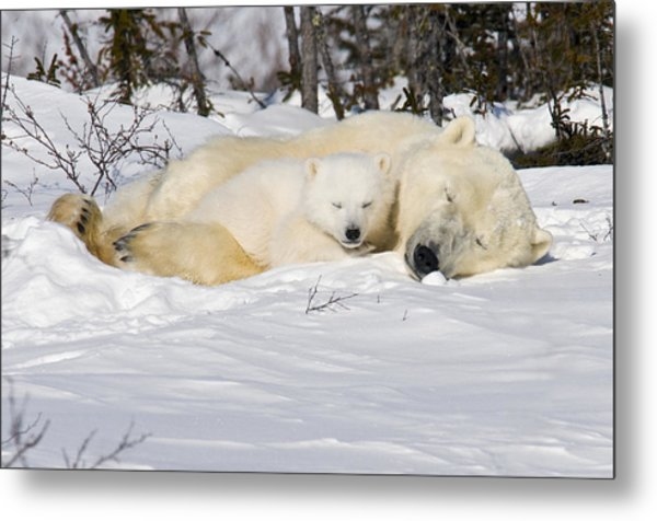 Snuggle Time Metal Print