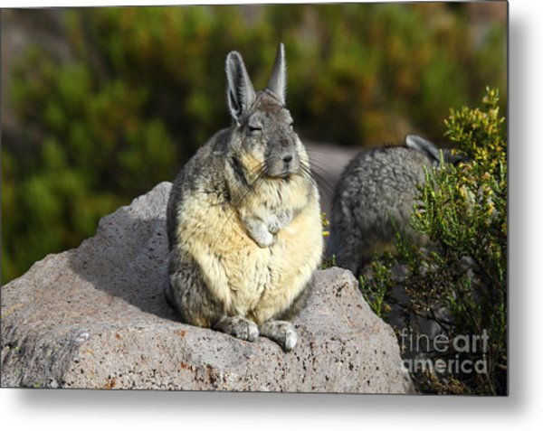 Soaking Up The Sun Metal Print