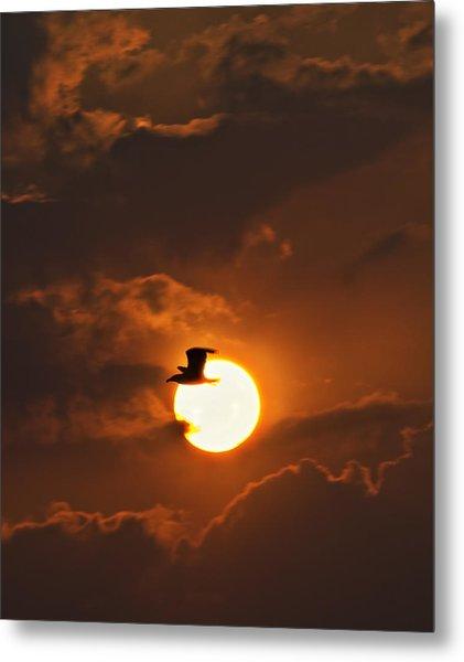 Soaring In The Sun Metal Print by Tony Reddington