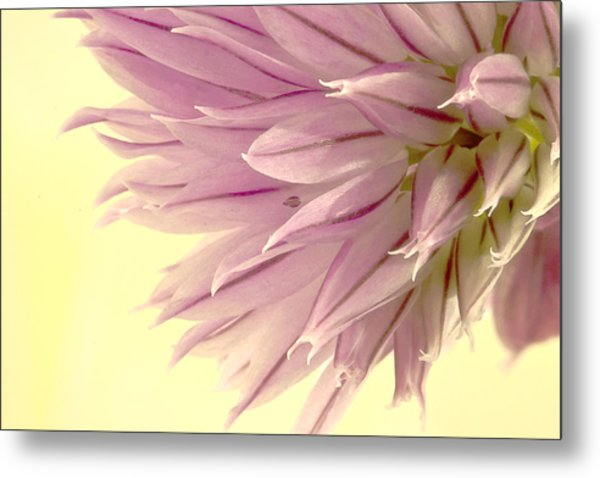 Soft And To The Point Metal Print