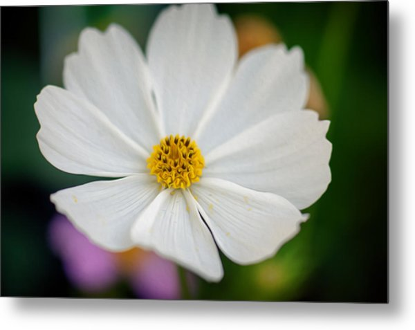Soft Color Flower Art Metal Print by Tammy Smith