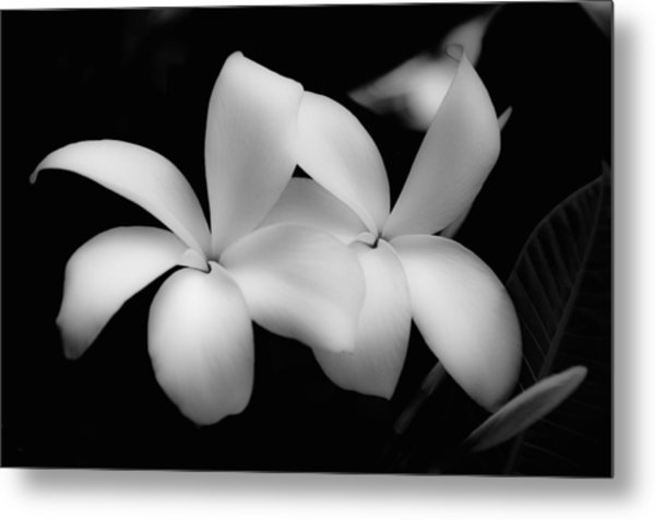 Soft Floral Beauty Metal Print