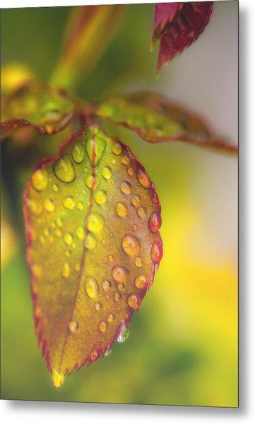 Soft Morning Rain Metal Print