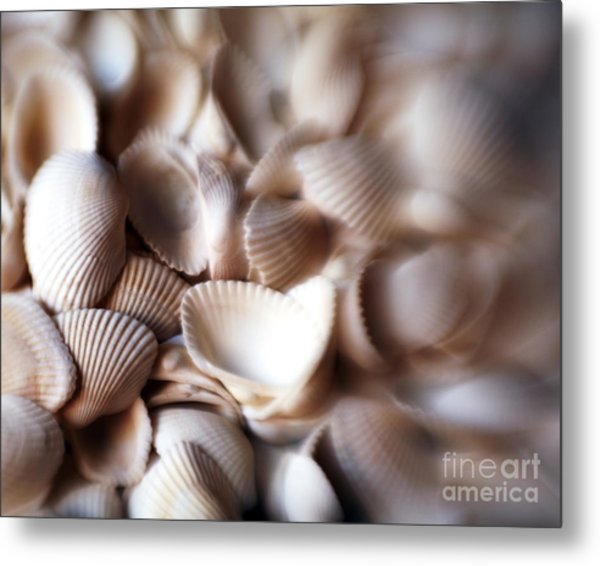 Soft Shells Metal Print
