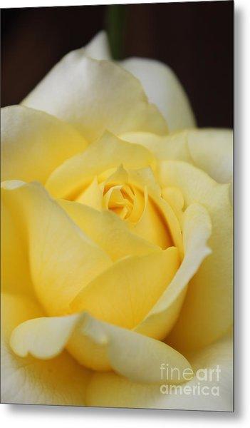 Soft Yellow Rose Metal Print