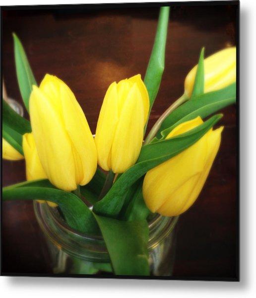 Soft Yellow Tulips Metal Print