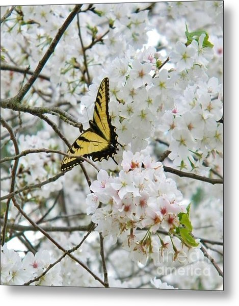 Softness Of Spring Metal Print