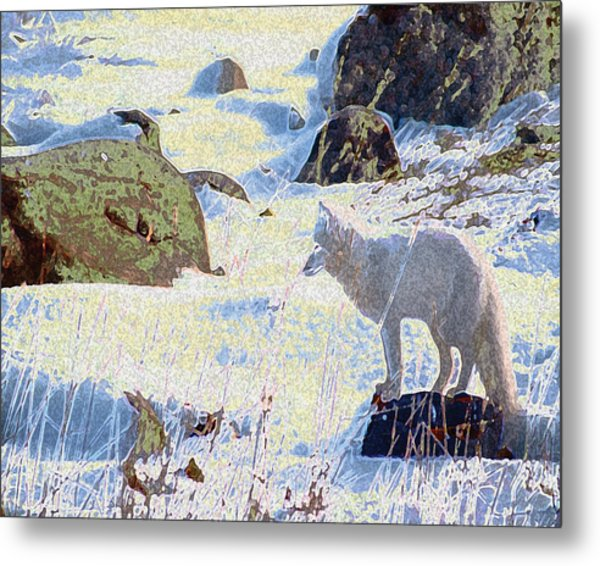Solitary Fox Metal Print