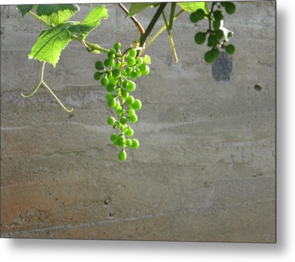 Solitary Grapes Metal Print