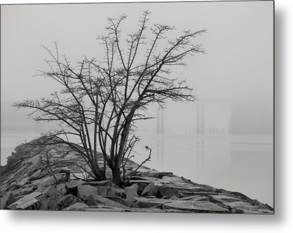 Solitary  Metal Print by JC Findley