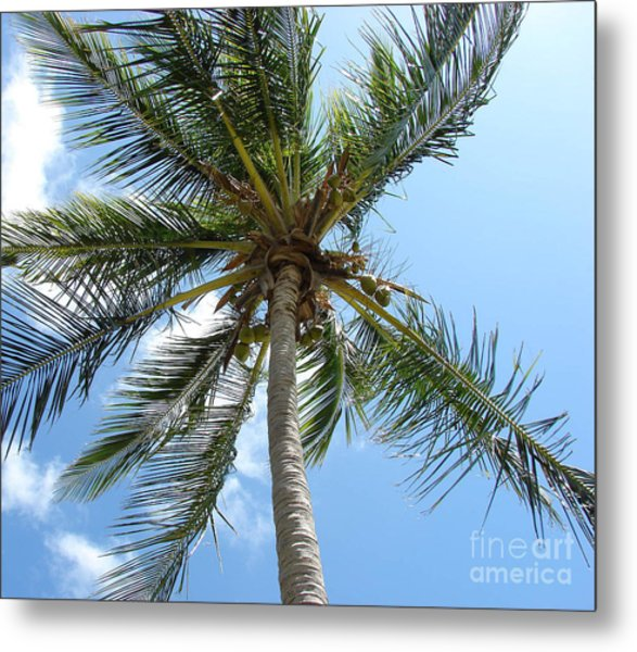 Solitary Palm Metal Print