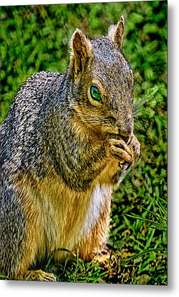 Some Squirrels Are Big Metal Print
