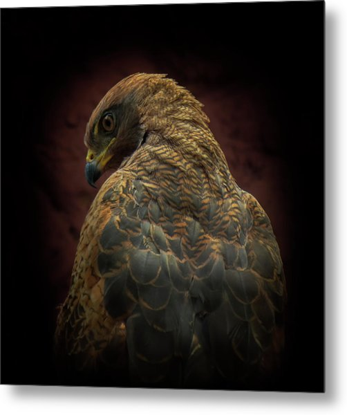 Somebody Watch Me-savanna Hawk Metal Print