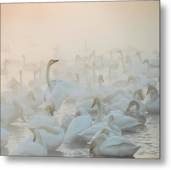 Song Of The Morning Light Metal Print