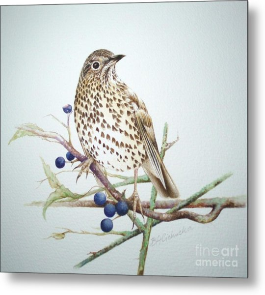 Song Thrush / Sold Metal Print