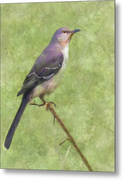Metal Print featuring the digital art Songster by Grace Dillon